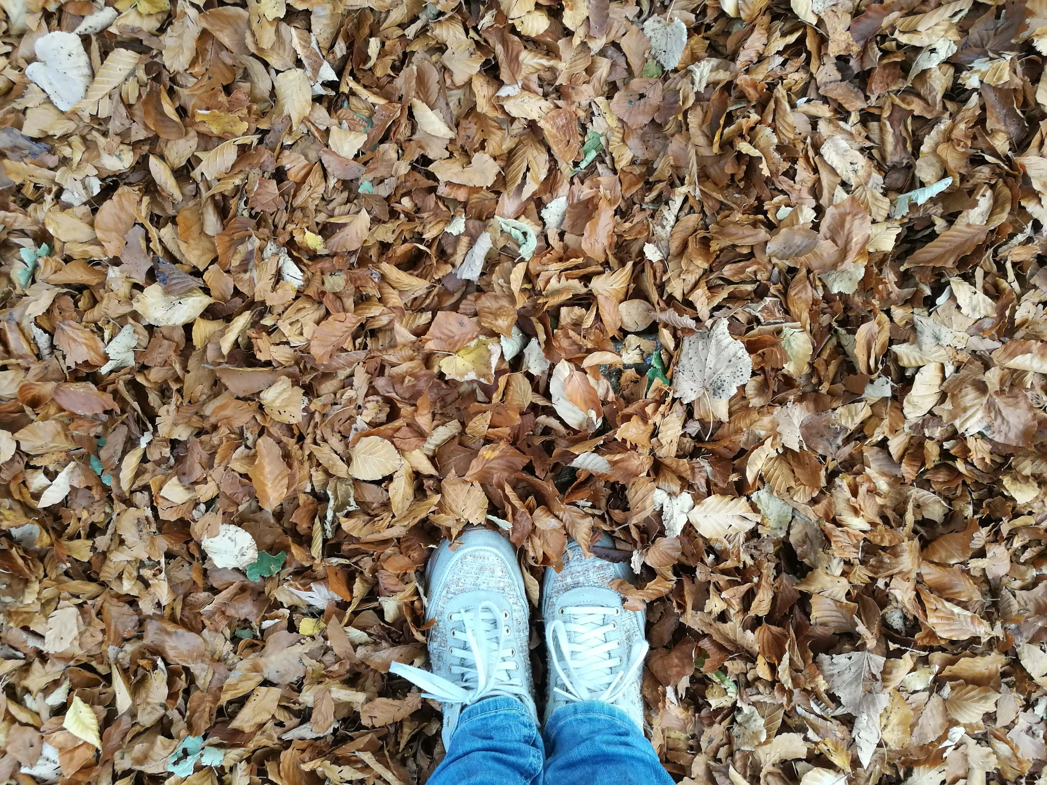 foliage valle vigezzina