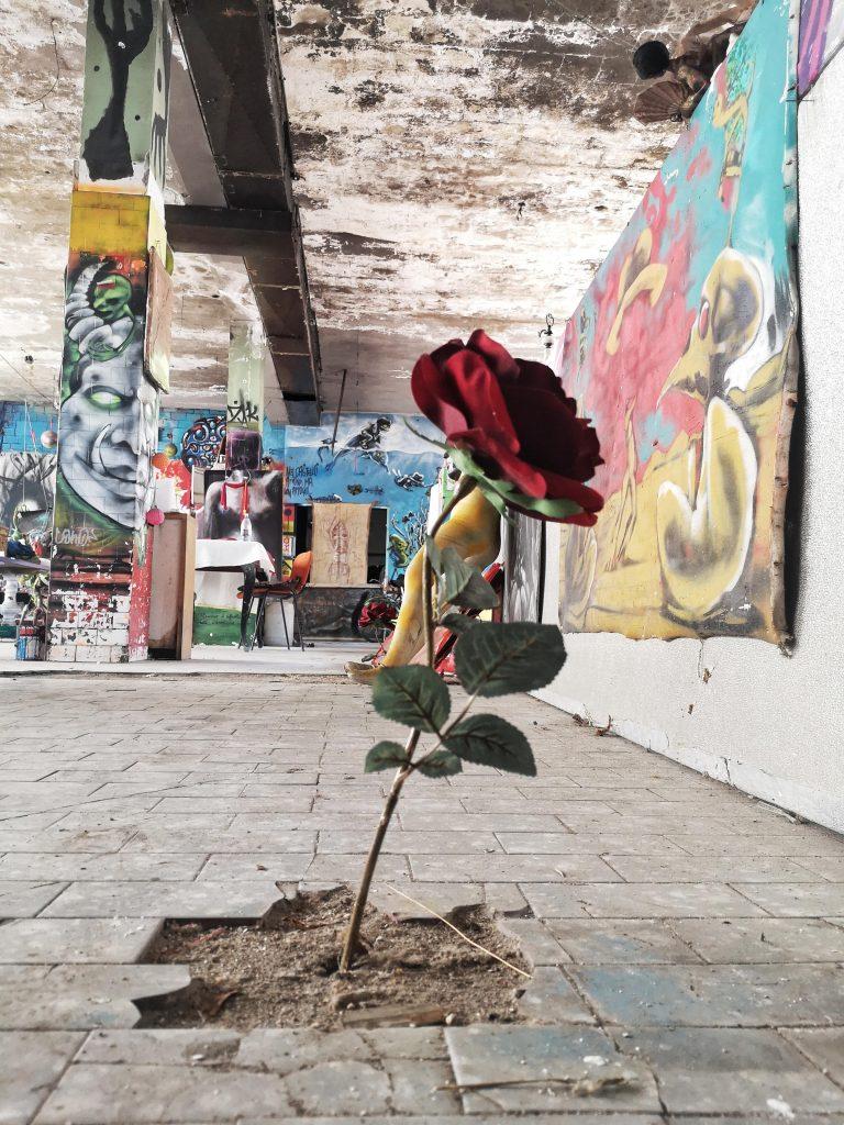 La rosa del castello di zak